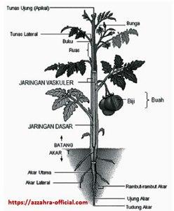 Morfologi Tumbuhan